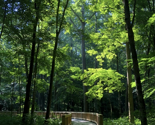 echo-river-trail-mammoth-cave-national-park